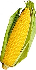 Corn Cob Baladi 1 pc