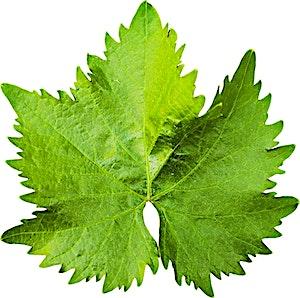 Vine Leaves Extra 0.5 kg