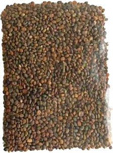 Purslane Local Seeds 10 g